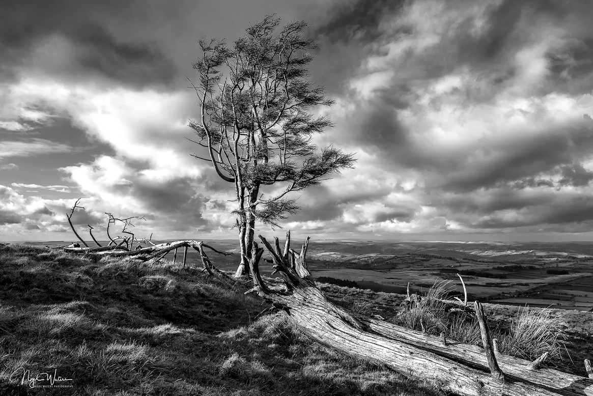 Lone Tree photograph Fan Frynych Brecon Beacons