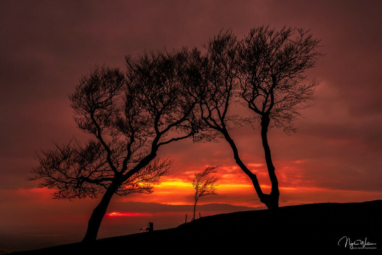 Cleeve-Hill-Trees