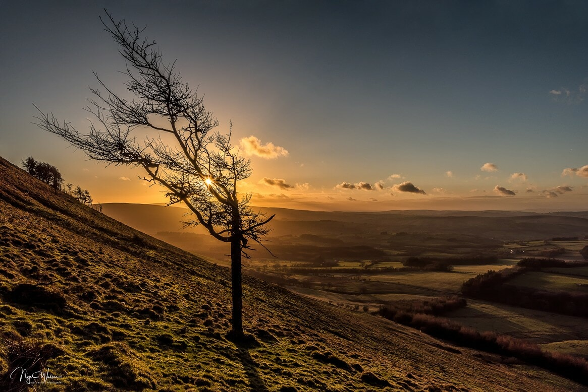 Lone Tree Brecon Beacons Wales