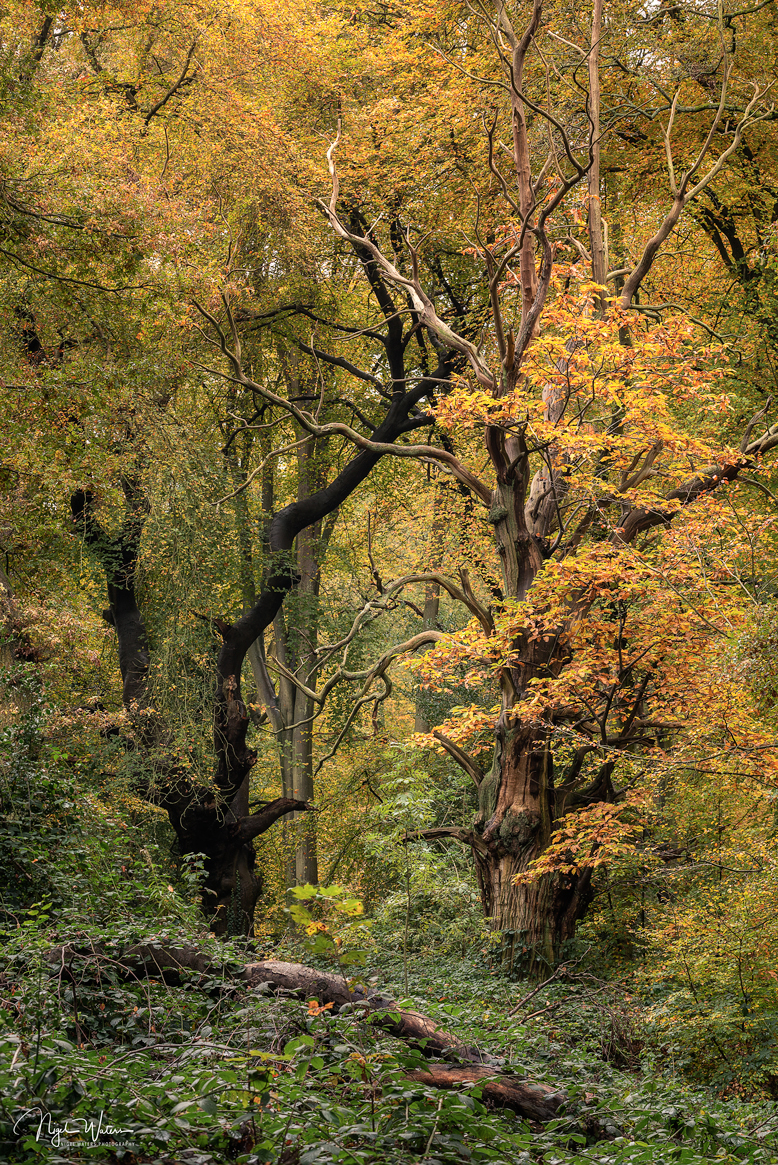 Woodland photograph called dancing queen by nigel waters photography