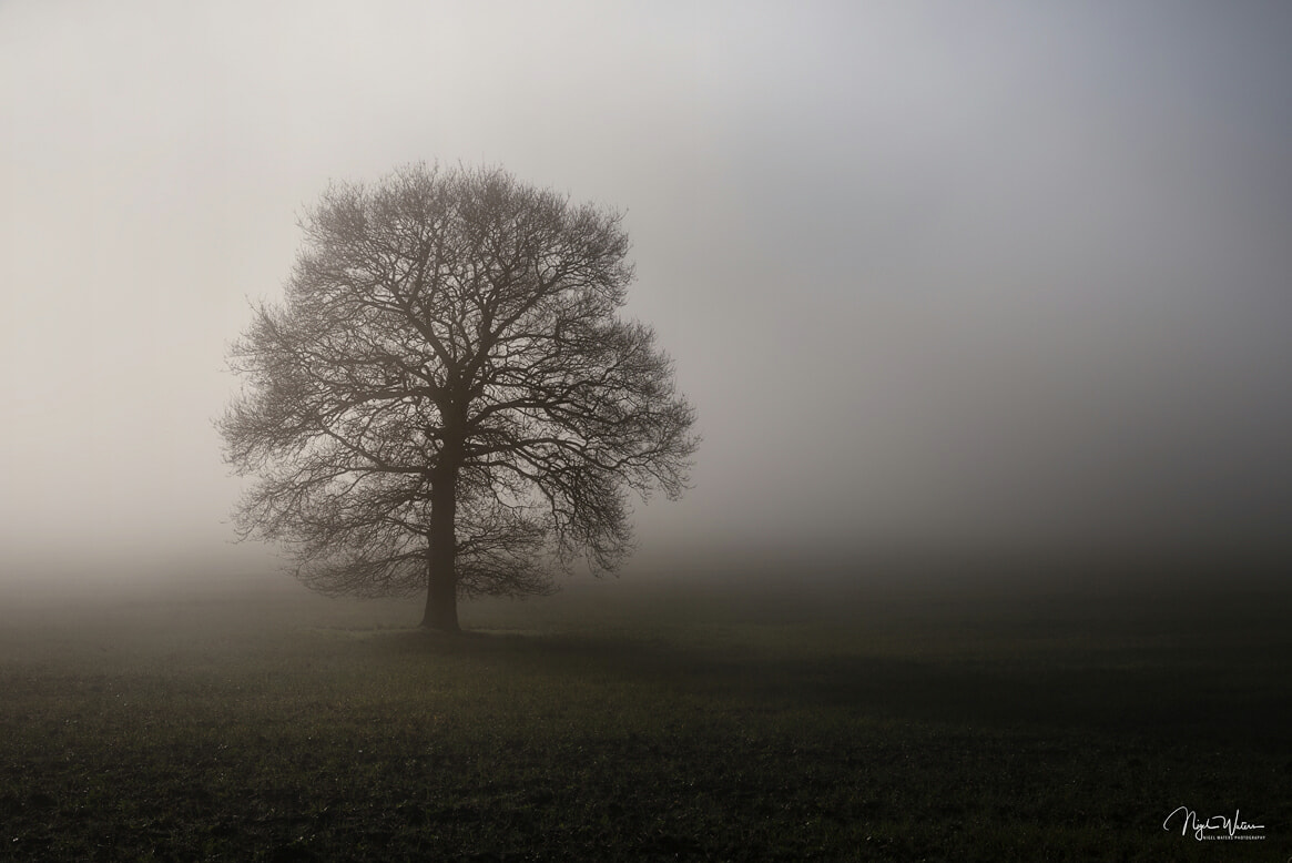 Photograph titled Solitude of a lone tree in fog