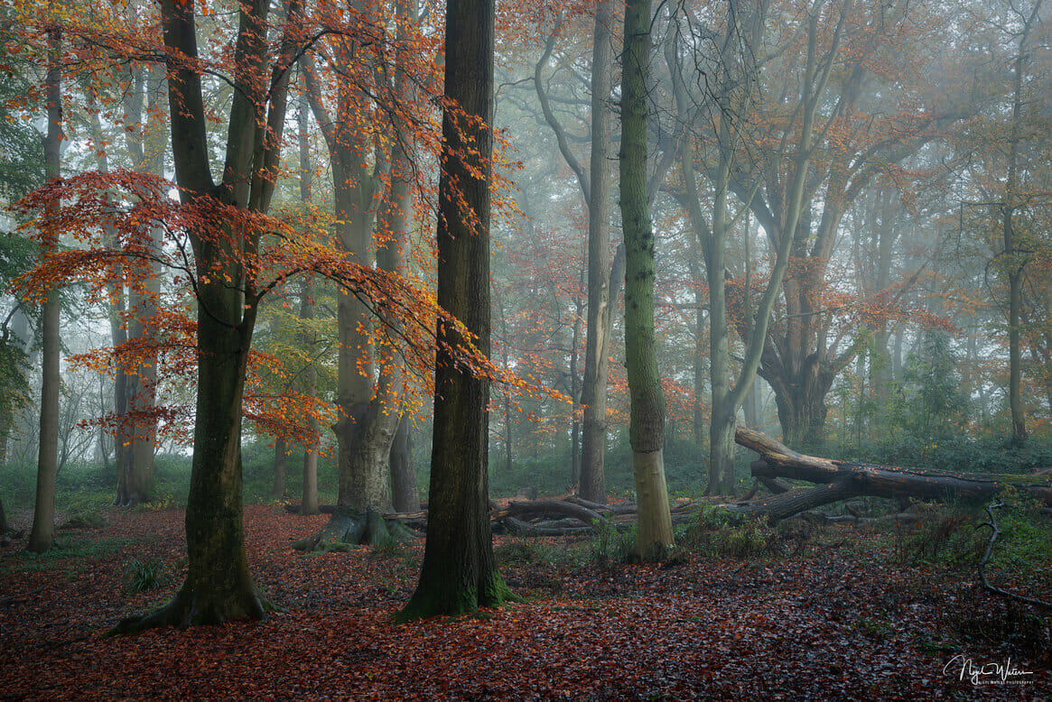 Divine Solace - Autumn Forest Woodland Photograph